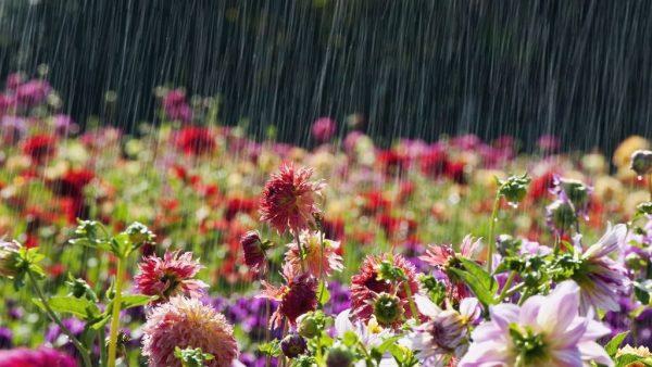 May 27th: Seasons of Joy, Love & Mercy