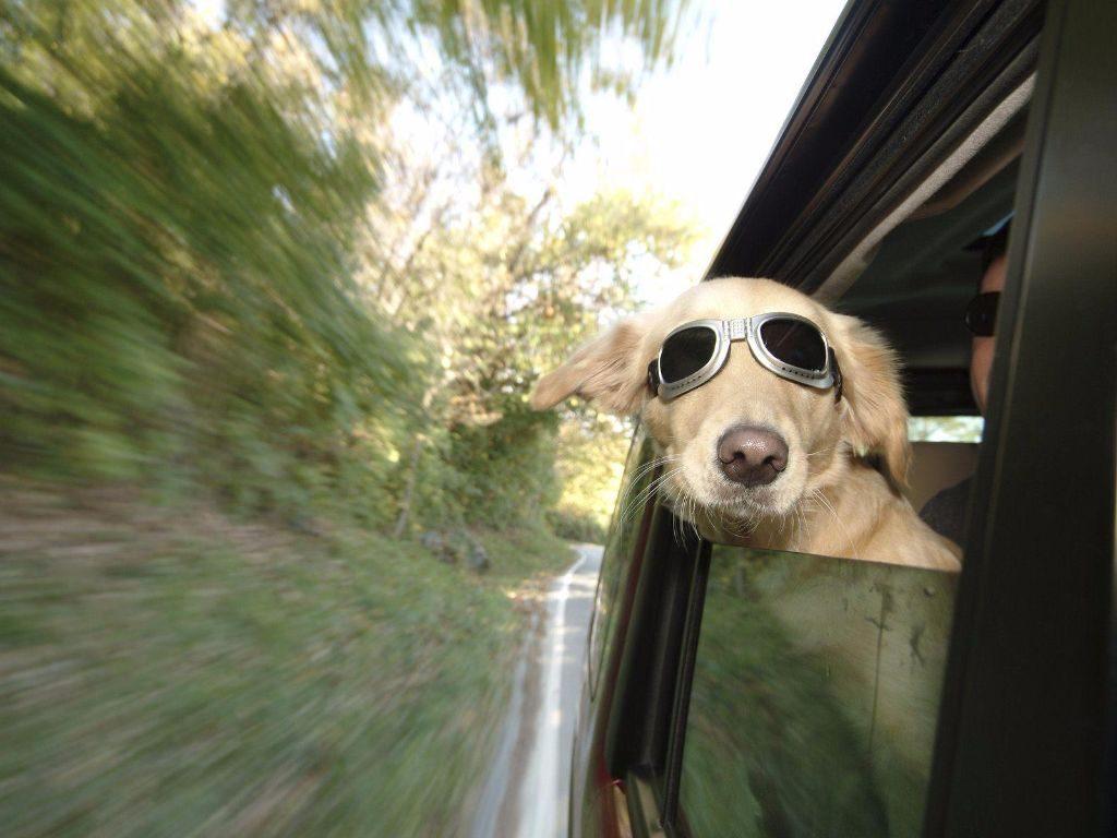 consejos-viajar-perro-coche-L-f3L15a